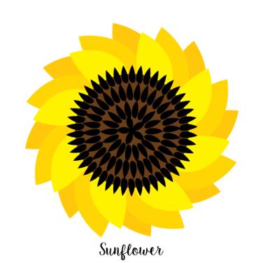 Sunflower_MalloryHazel