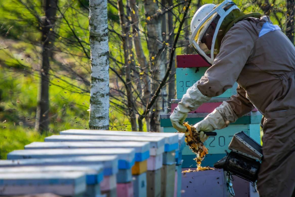 Le pays malouin a goût de miel