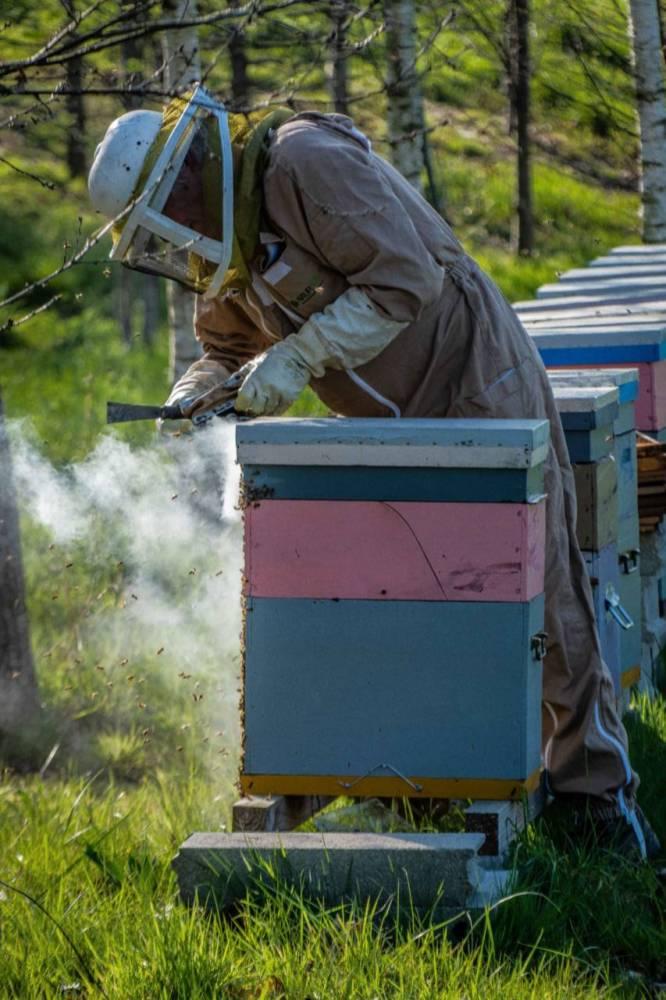 Charles enfume ses abeilles
