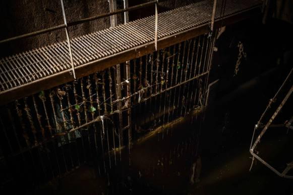 A droite des grilles se cache l'une des vieilles portes-clapets en chêne. C'est là qu'après un orage, Philippe a découvert des dizaines de rats morts, pelés, certains gros comme des chats.