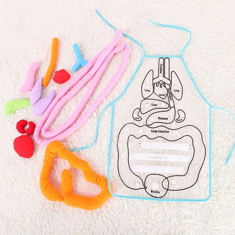 Avental Da Anatomia