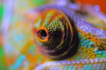 Odzwierciedlenie Kolorów
