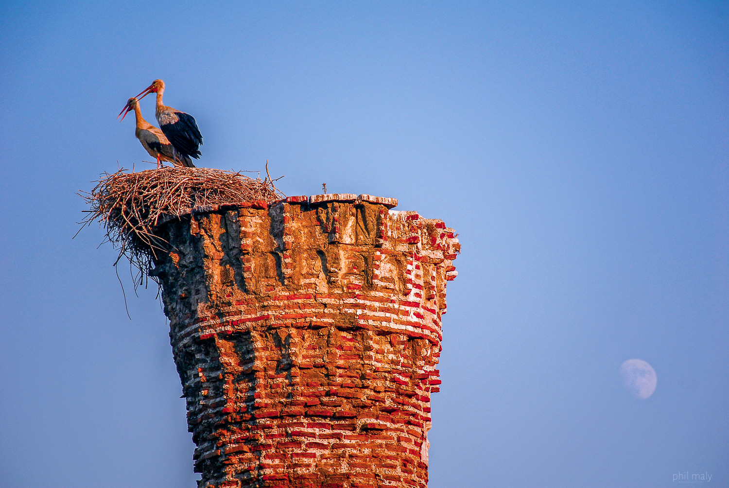Storks on an abandoned chimney in Turkey