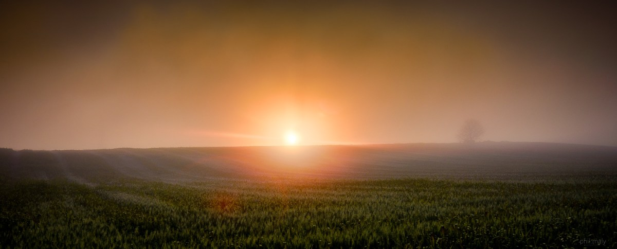 Sunrise during a misty morning over a corn field