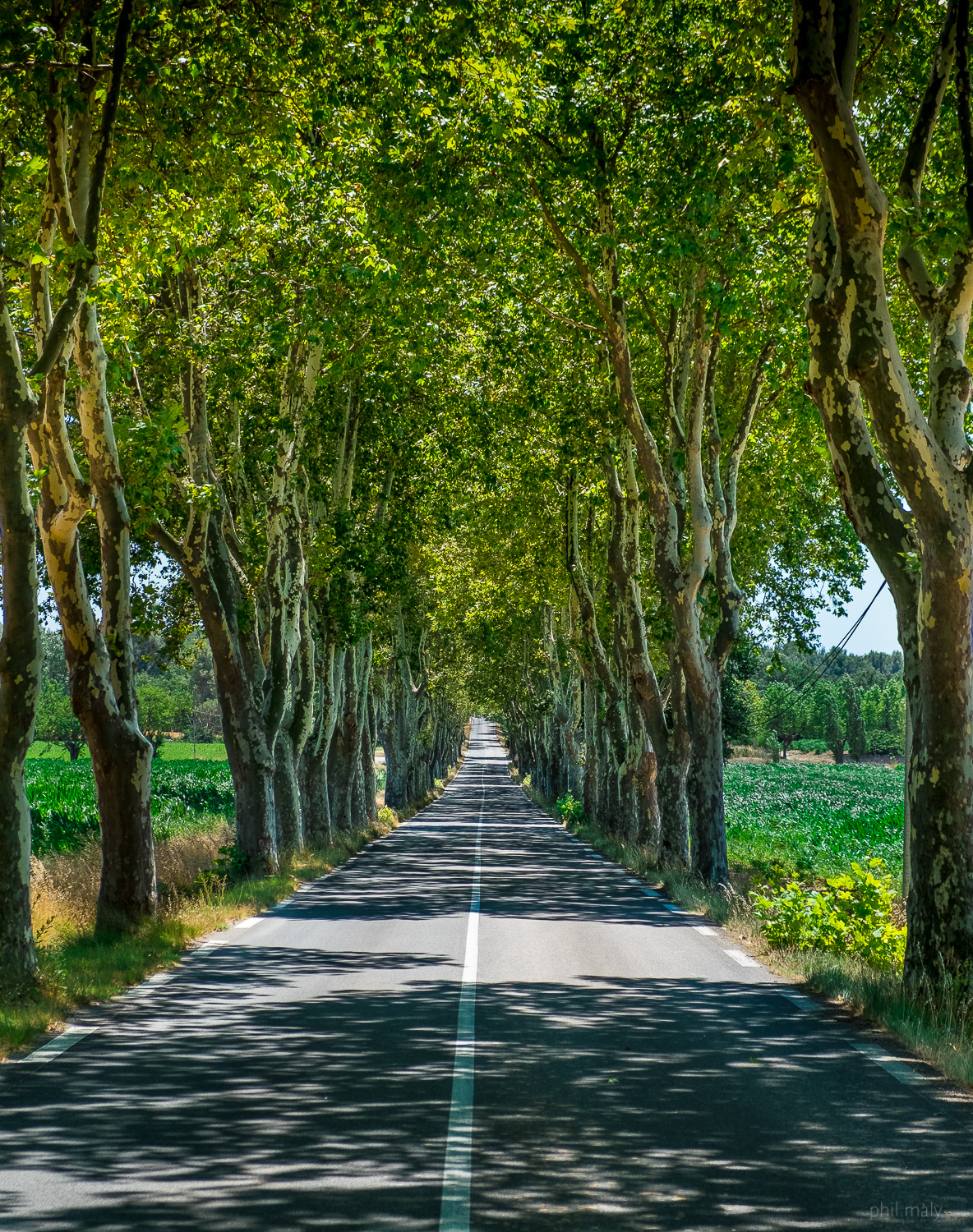 Road under a long alley of trees in Provence