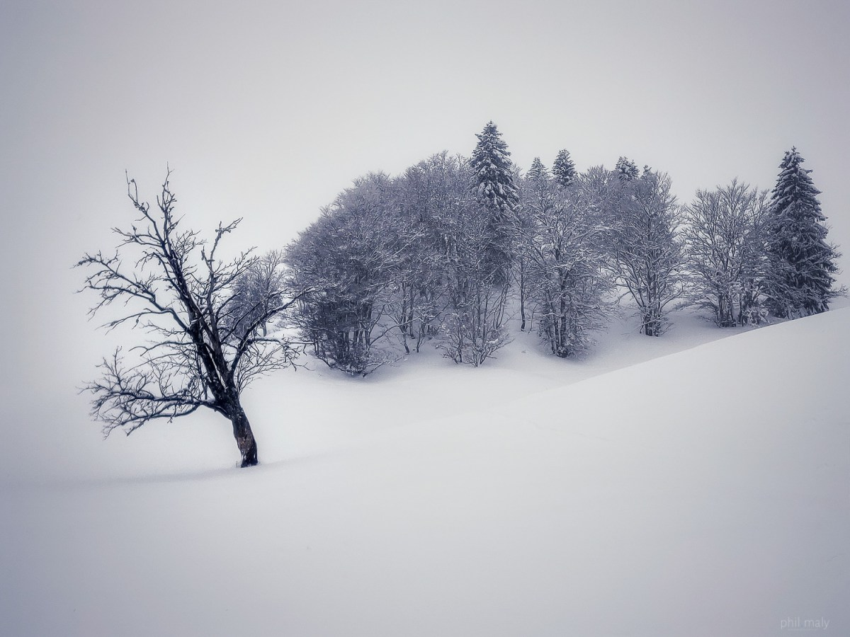 Snow covered trees in a white landscape close to the summit of La Dole