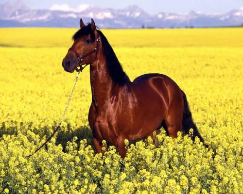 Красивая картинка Конь в поле цветов на рабочий стол ...
