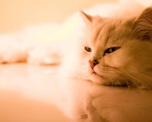 Красивая картинка Грустная кошка на рабочий стол, красивые ...