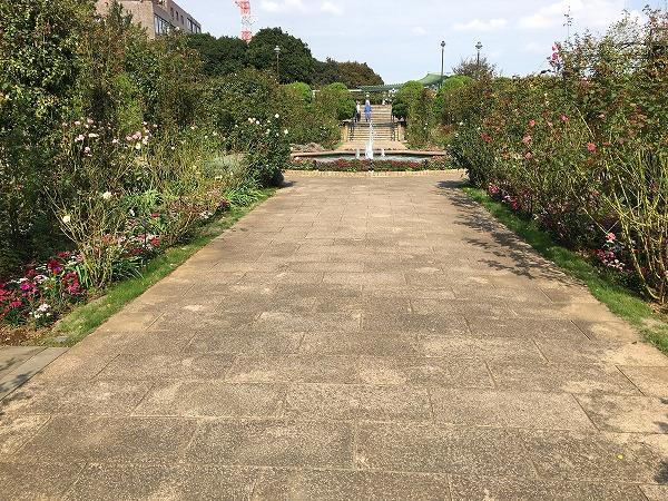 港の見える丘公園のバラ2018秋