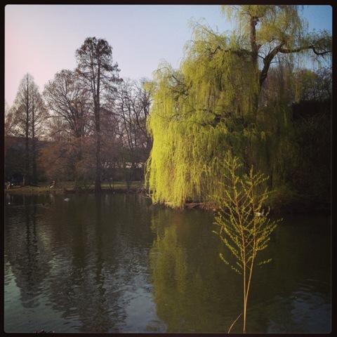 Es grünt im Park die Weide...