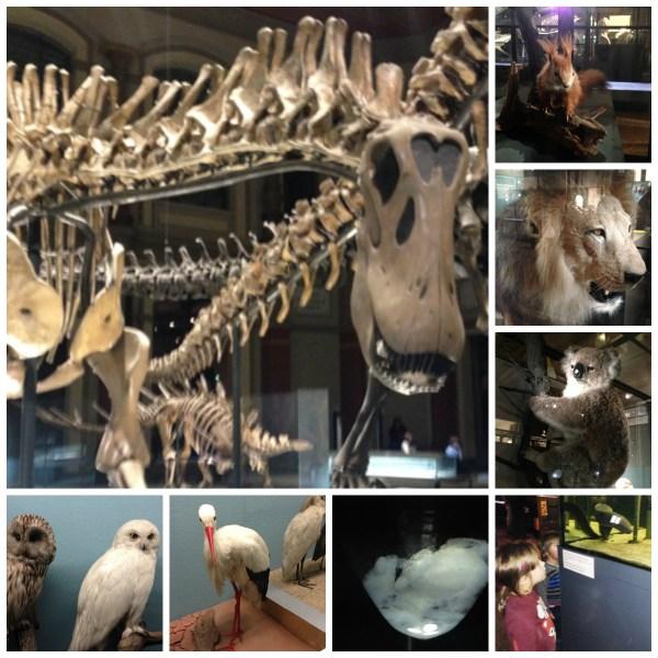 NaturkundeMuseum Berlin