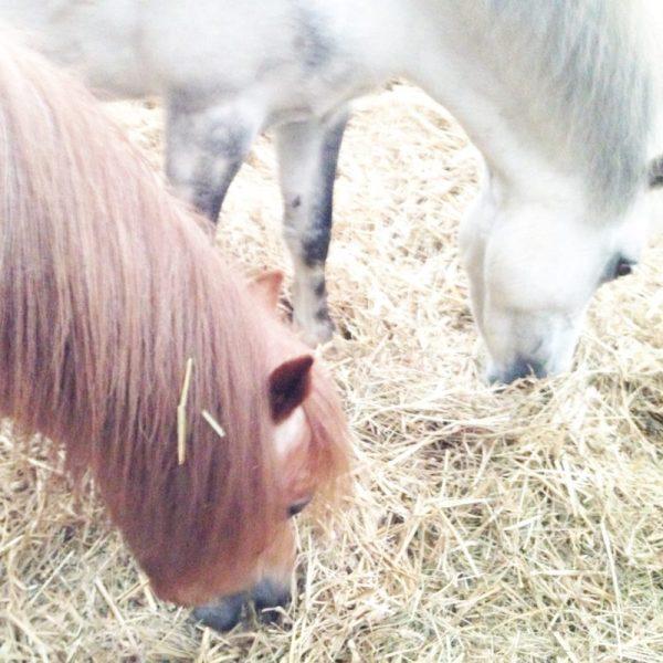 Ponys Reiten