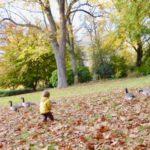 Gastbeitrag: Das Herbstgespräch
