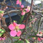Freitagslieblinge vom 2. März – Frühlingsboten bei Minusgraden