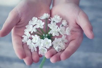 両手の中に花