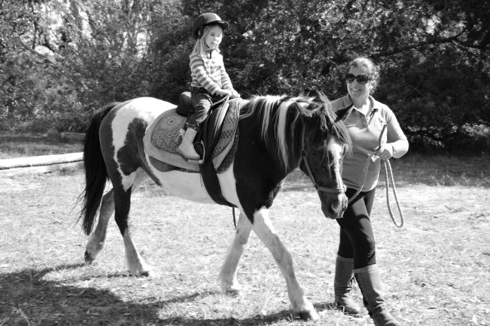 horse220-copy