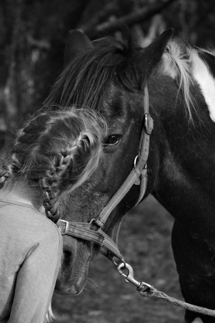 horse278-copy