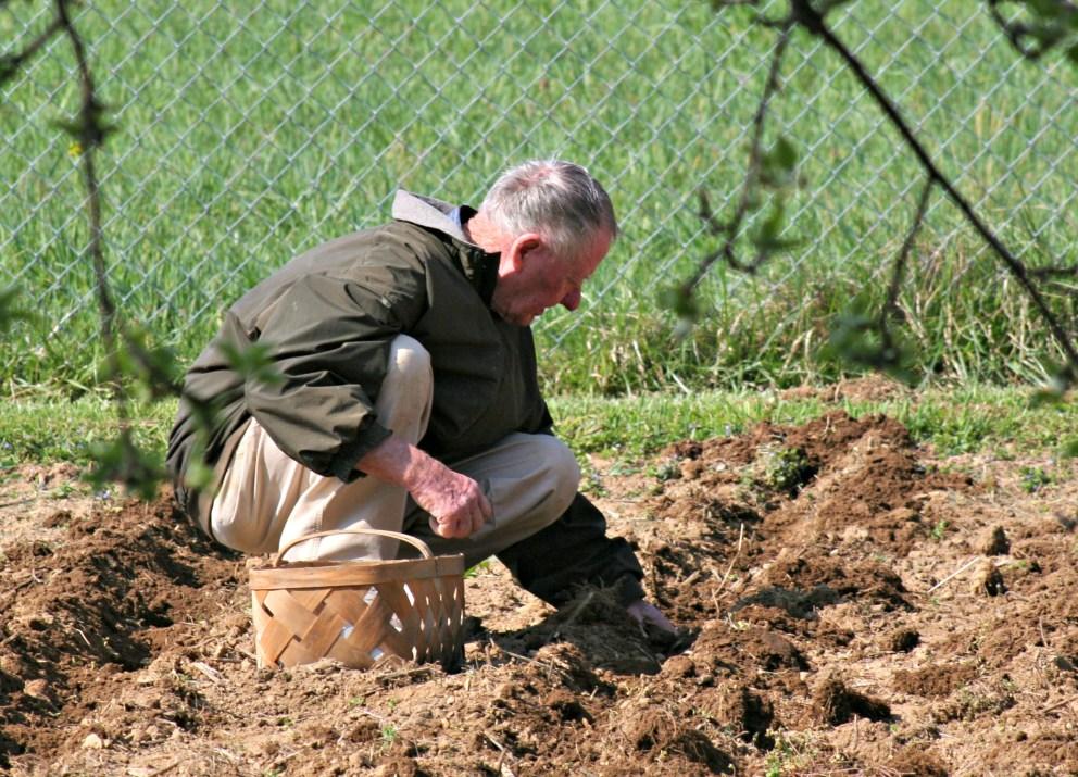 Planting Potatoes - time