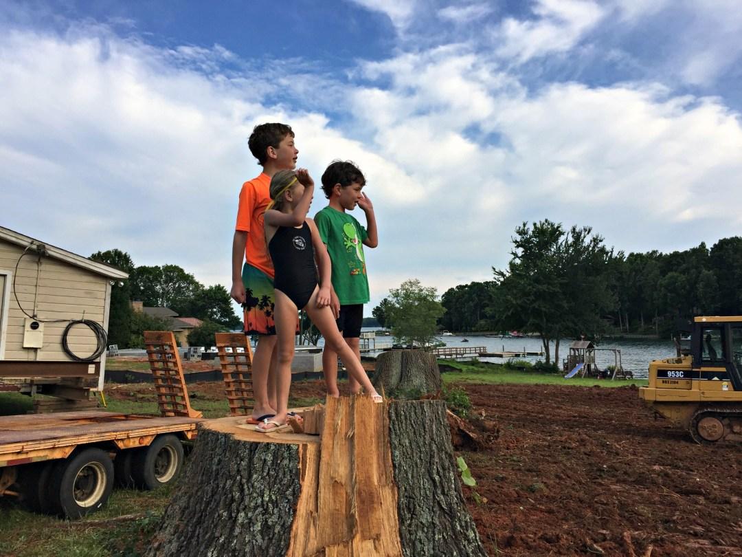 Stump Standing - Summer Survival