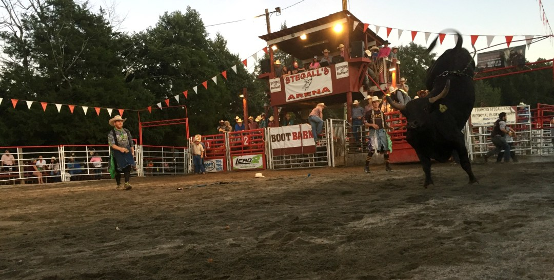 Bucking Bull at the Rodeo