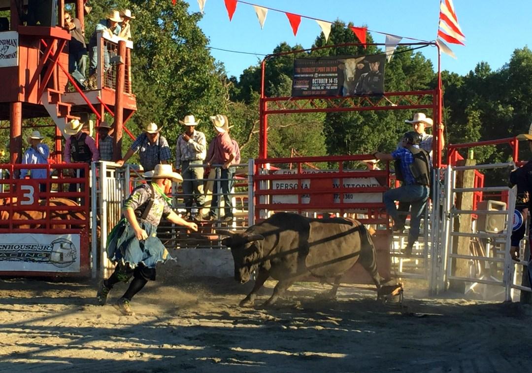 Free Bull - Rodeo