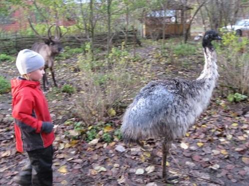 Автопутешествие МамаКлуб к страусам