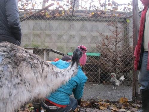 Автопутишествие  к страусам (71)