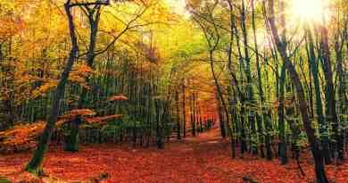 beauty of Oregon's Fall foliage