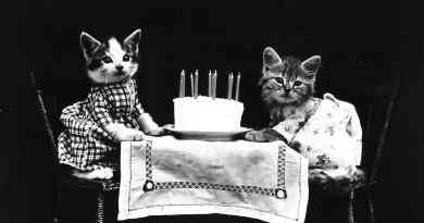 cat's birthday