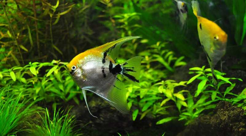 mold in your fish tank