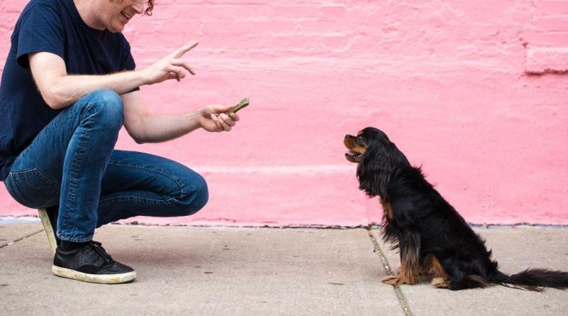 commands for your dog