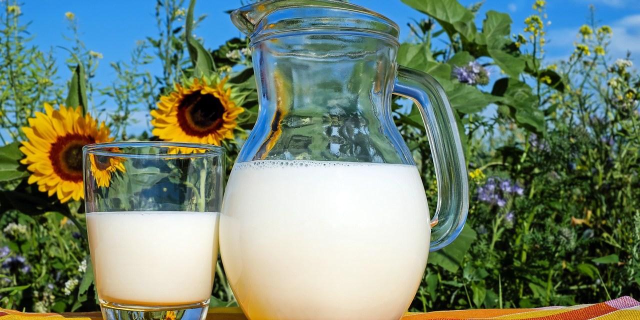 Como, quando e por que consumir leite e derivados?