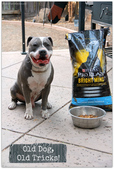 Old Dog, Same Old Tricks with Purina Pro Plan #BrightMind dog food from Petsmart (ad)| Mama Harris' Kitchen