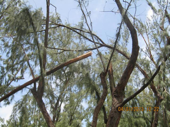 Cyclone Dumile 043
