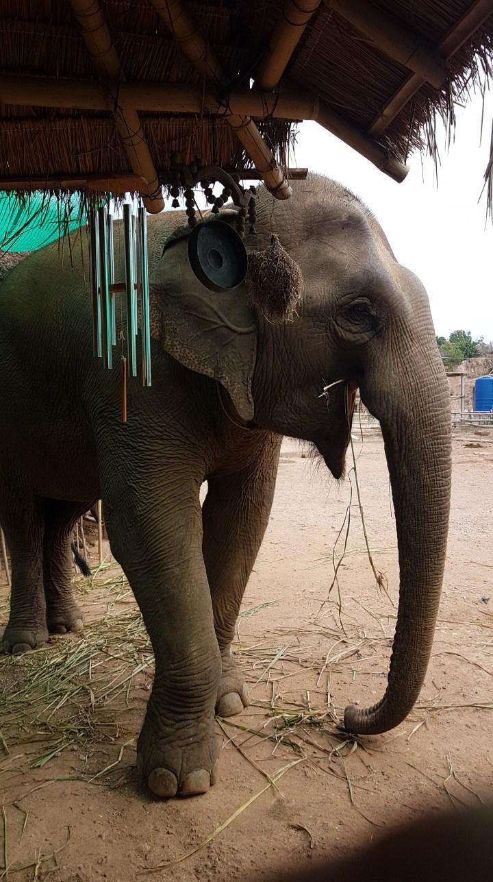 Chiang Rai – Une journée dans la jungle avec les éléphants