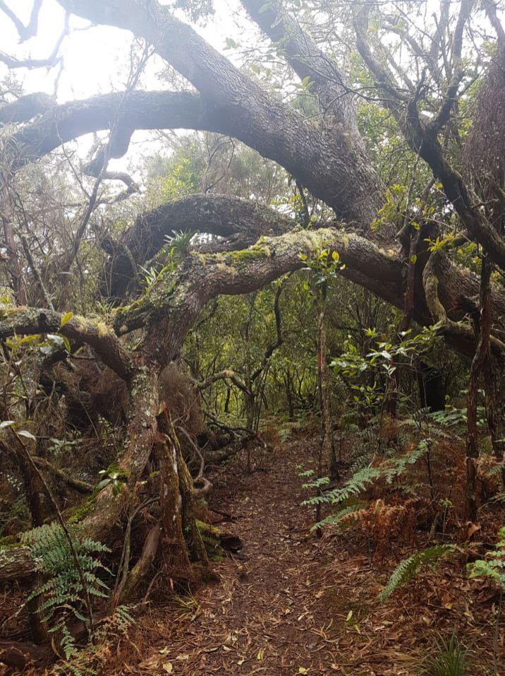 Forêt Avril 2
