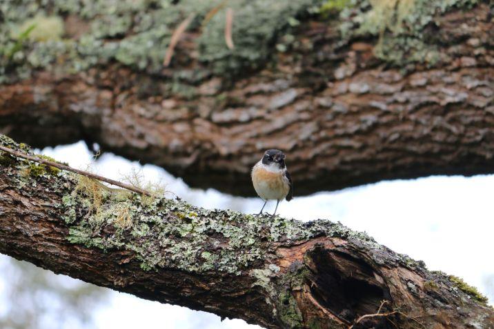 Forêt Avril 4