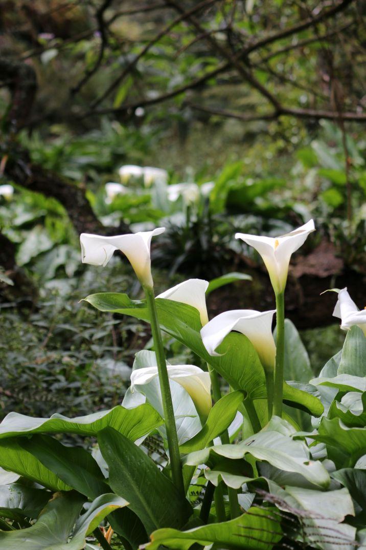 Forêt Avril 5