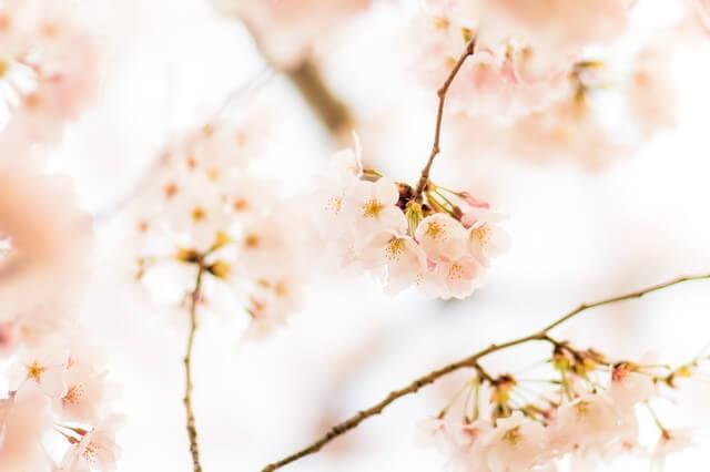 小江戸川越 舟遊び 春祭り