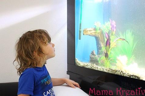 Aquarium für kinder