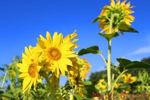 Wochenende in Blumen