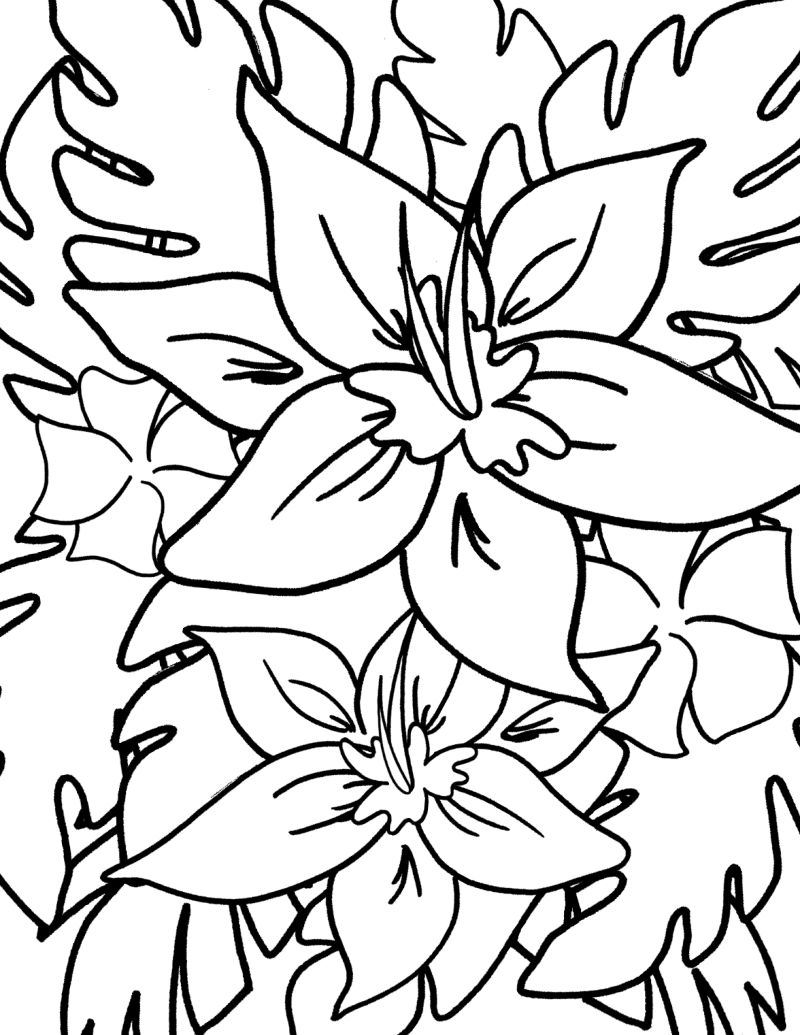 Hawaiian Tropical Flowers Coloring Page Mama Likes This