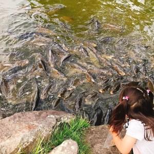 小布施オープンオアシス鯉の餌