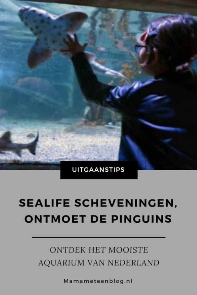 Sealife Scheveningen mamameteenblog.nl