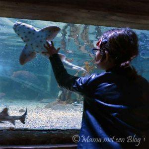 sealife mamameteenblog
