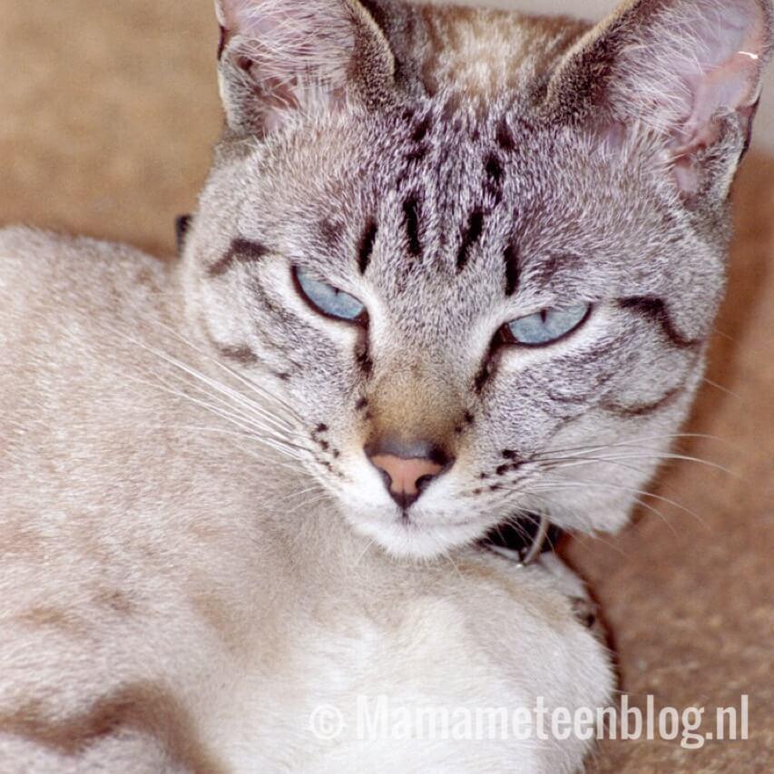 Afscheid scuba siamees 1 mamameteenblog.nl