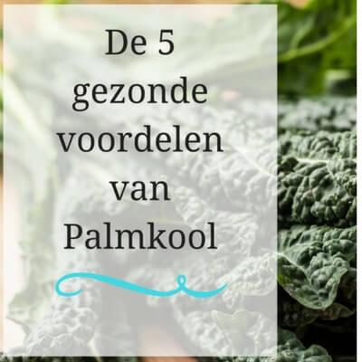 5 gezonde voordelen van palmkool mamameteenblog.nl