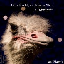 Gute Nacht, du falsche Welt - Mozart - La Flûte enchantée