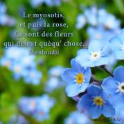 Le myosotis, et puis la rose, ce sont des fleurs qui disent quèqu' chose - Mouloudji