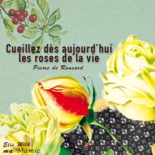 Cueillez dès aujourd'hui les roses de la vie - Pierre de Ronsard - Elis Wilk - Ma Mamie en POévie